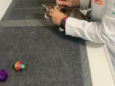 Quintau Pet - Consultório de Felinos